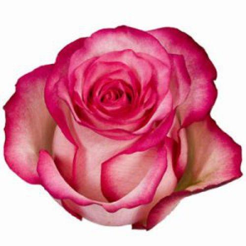 роза карусель  - Доствка цветов Раменское, Жуковский