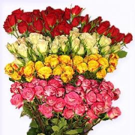Роза кустовая Эквадор